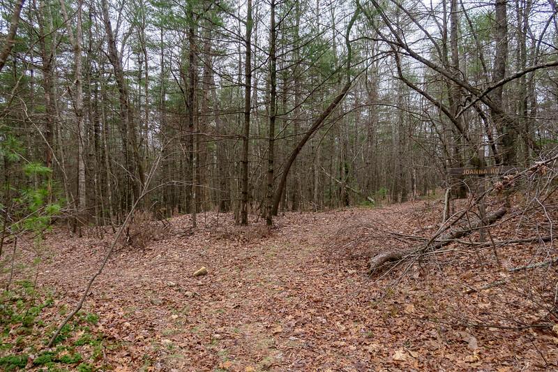 Joanna Road/Grassy Meadow Trail Upper Junction -- 2,900'
