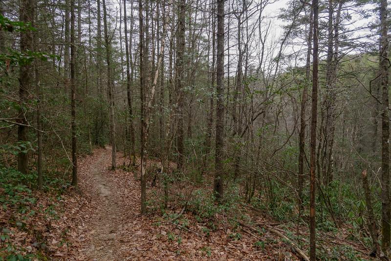 Grassy Creek Trail -- 2,540'
