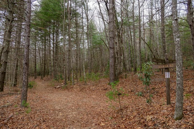 Joanna Road/Grassy Meadow Trail Lower Junction -- 2,740'