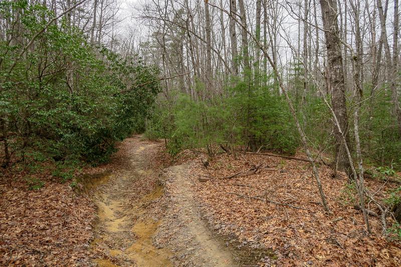 Grassy Creek Trail -- 2,760'