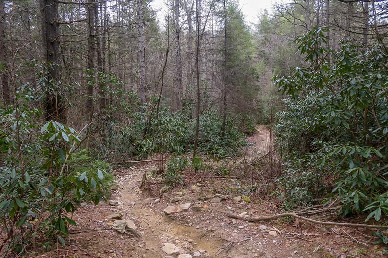 Grassy Creek Trail -- 2,520'