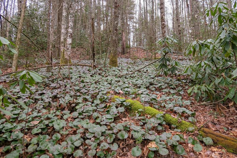 Grassy Creek Trail -- 2,560'