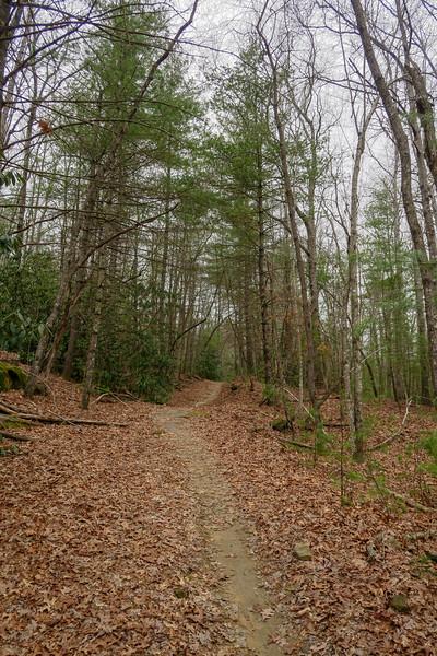 Grassy Creek Trail -- 2,740'