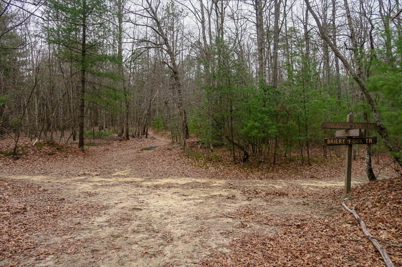 Joanna Road/Briery Fork/Grassy Creek Trail Junction -- 2,780'