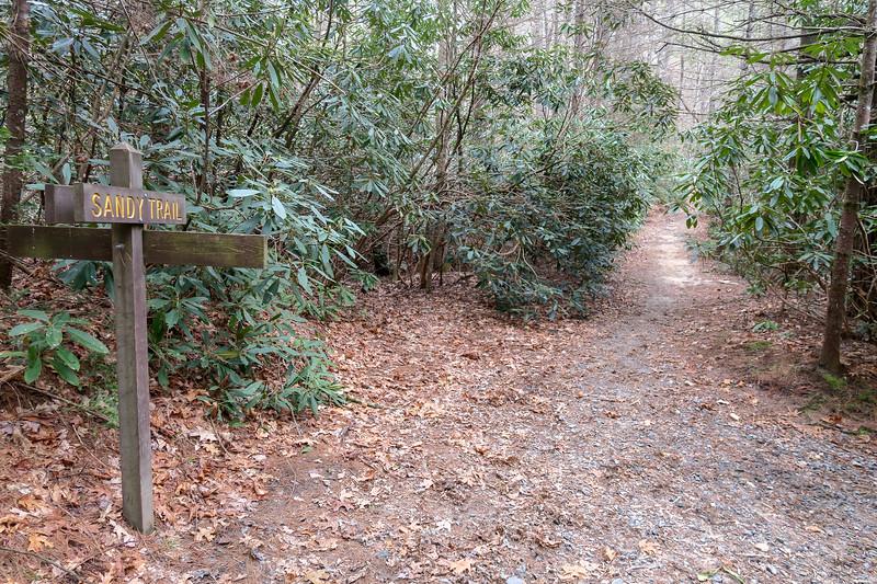 Grassy Creek/Sandy Trail Junction -- 2,510'