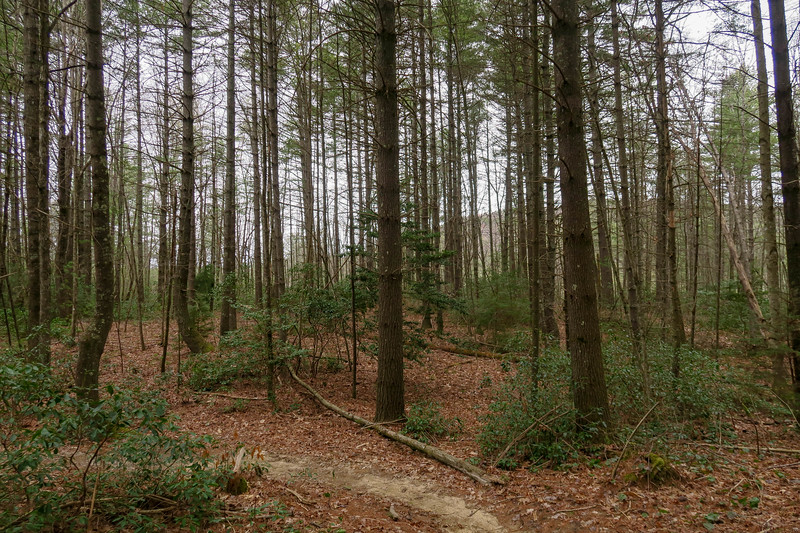 Grassy Creek Trail -- 2,660'