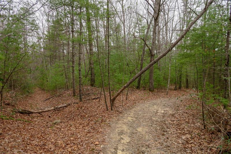 Grassy Creek Trail -- 2,710'