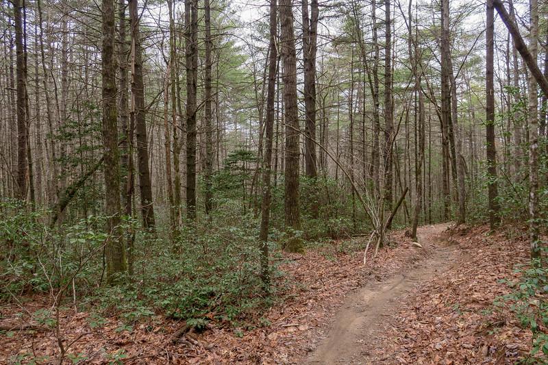Grassy Creek Trail -- 2,640'