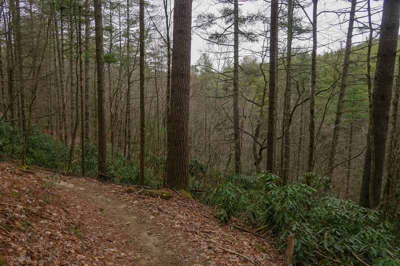 Grassy Creek Trail -- 2,570'