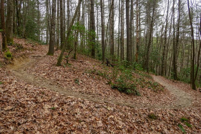 Grassy Creek Trail -- 2,590'