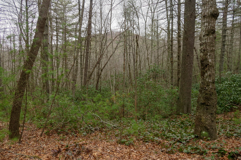 Grassy Creek Trail -- 2,720'
