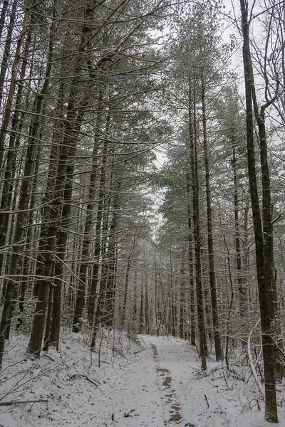 Hooker Creek Trail -- 2,640'