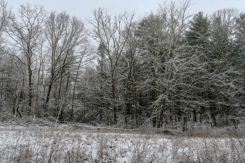 White Pine Trail -- 2,690'