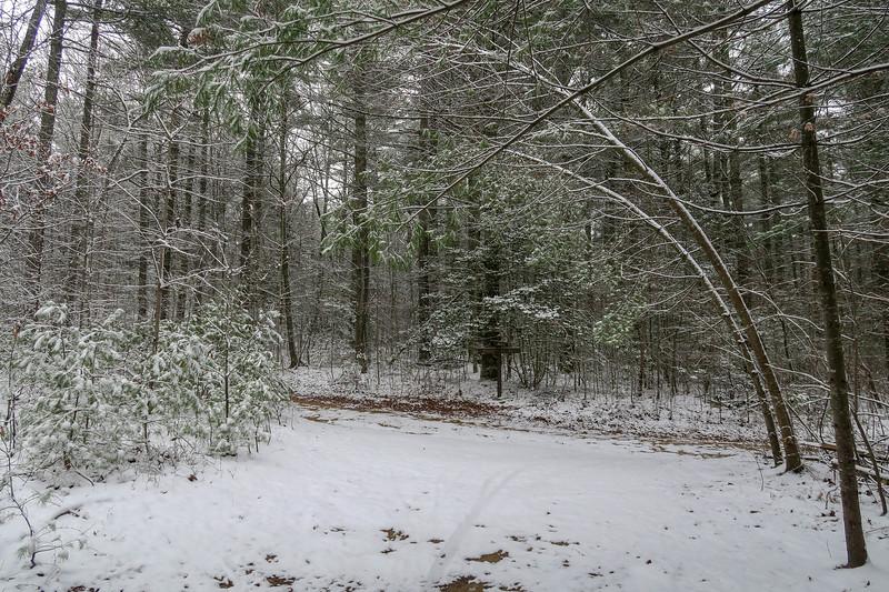 Hooker Creek/White Pine Trail Junction -- 2,740'