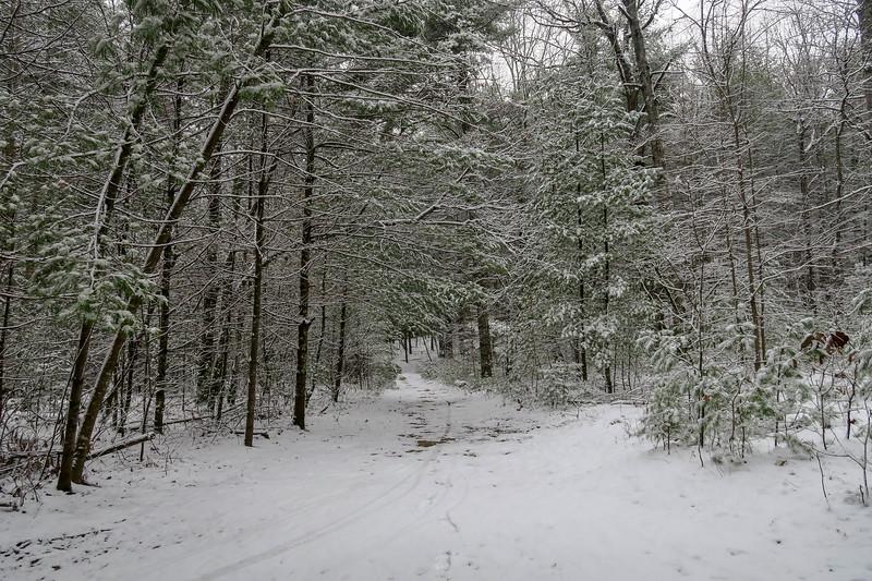 White Pine Trail -- 2,730'