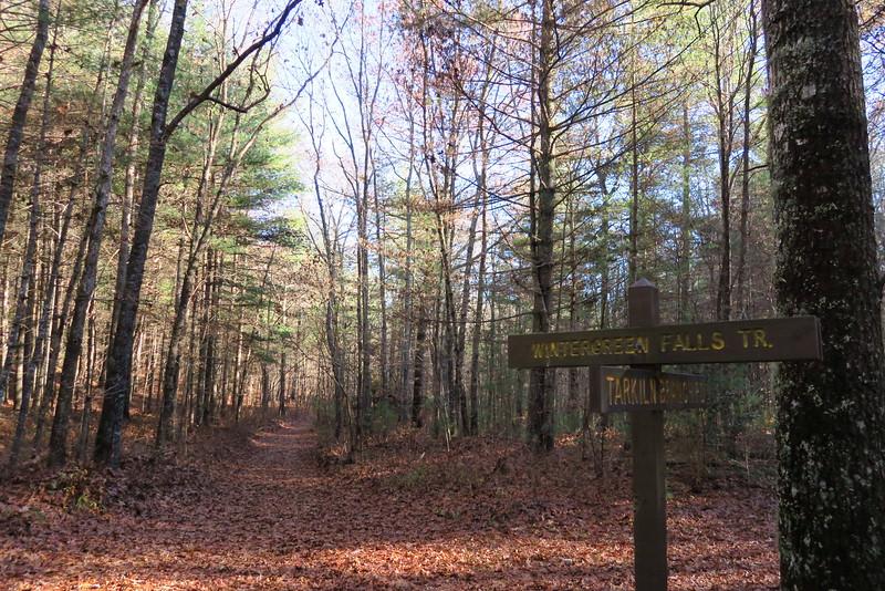 Tarklin Branch Road-Wintergreen Falls Trail Junction