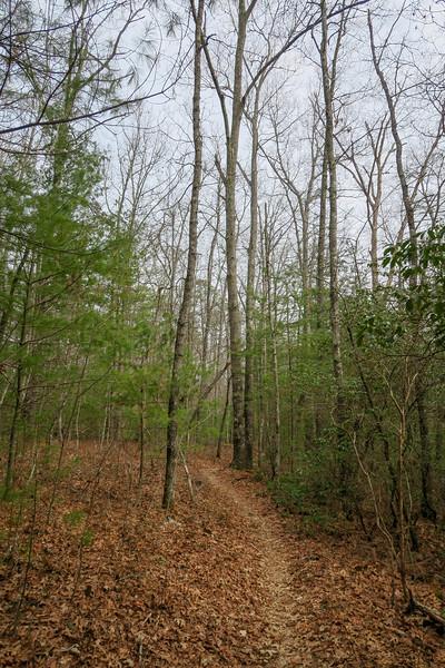 Pine Tree Trail -- 2,720'