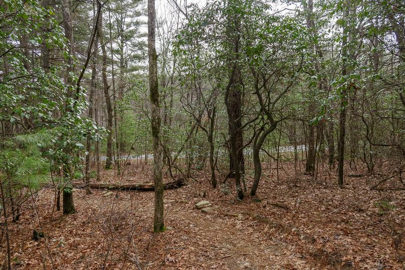 Pine Tree Trail -- 2,680'