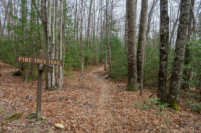 Sheep Mountain/Pine Tree Trail Junction -- 2,730'