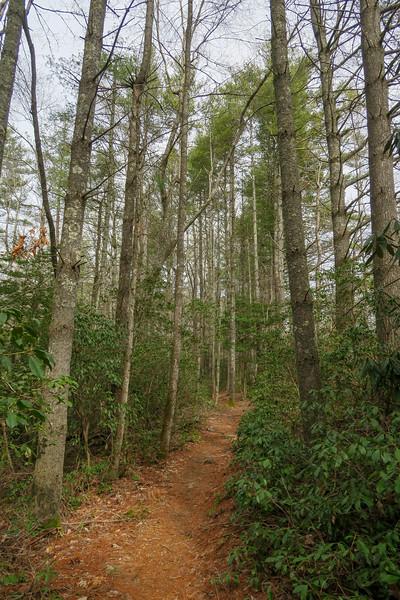 Pine Tree Trail -- 2,800'