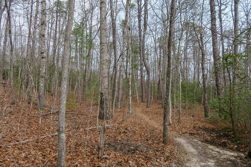 Pine Tree Trail -- 2,700'