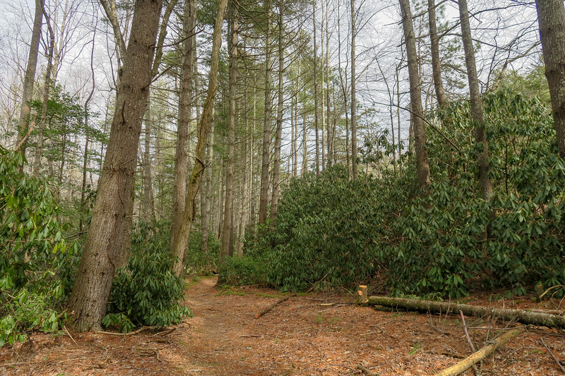 Pine Tree Trail -- 2,790'