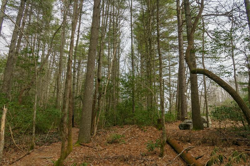Pine Tree Trail -- 2,820'