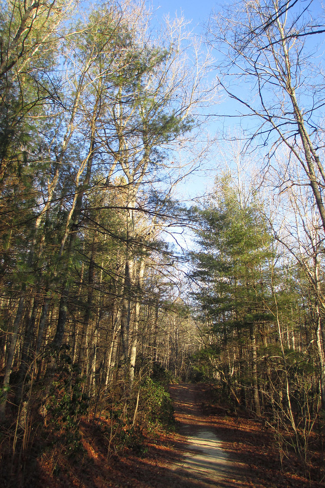 As with most trails in DuPont State Forest, the Rocky Ridge Trail was wide and easy to follow...