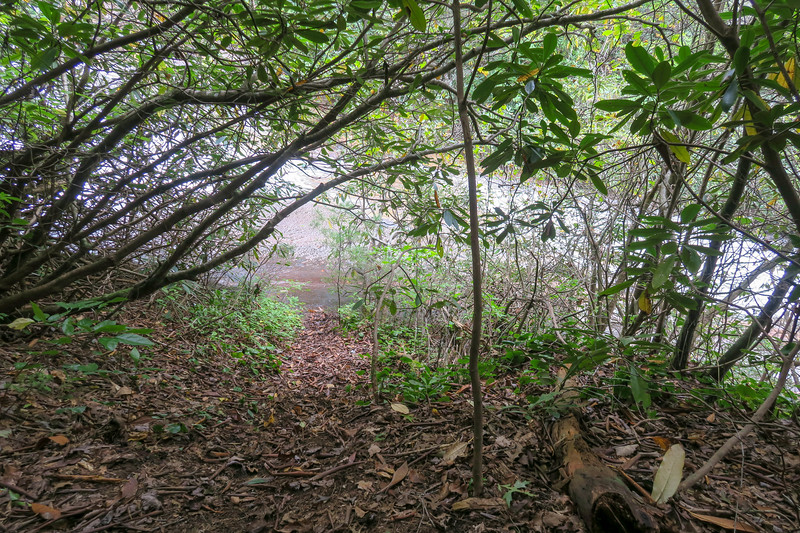 Upper Grassy Falls Path