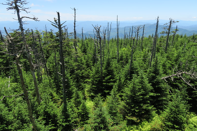 Clingmans Dome (MST West Terminus) -- 6,643'