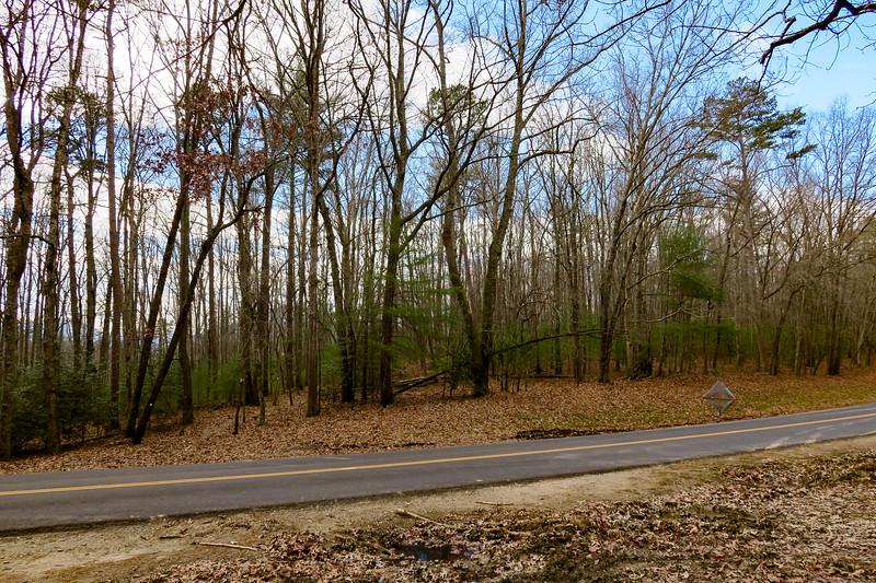 Mountains-to-Sea Trail @ Blue Ridge Parkway -- 2,180'