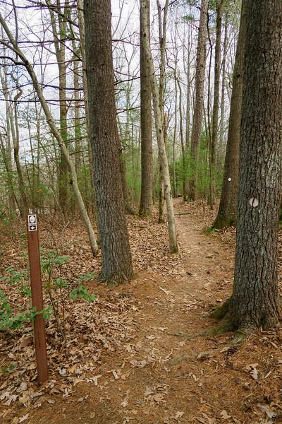 Mountains-to-Sea Trail -- 2,200'