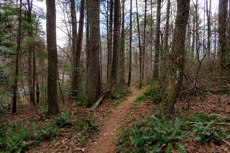 Mountains-to-Sea Trail -- 2,150'