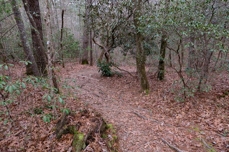 Mountains-to-Sea Trail -- 2,120'