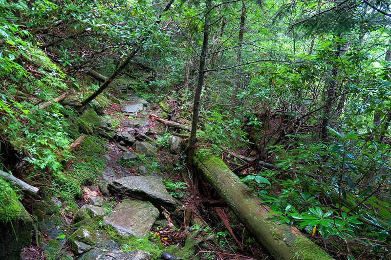 Mountains-to-Sea Trail - 5,750'