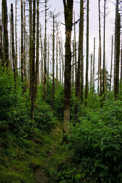 Mountains-to-Sea Trail - 6,080'
