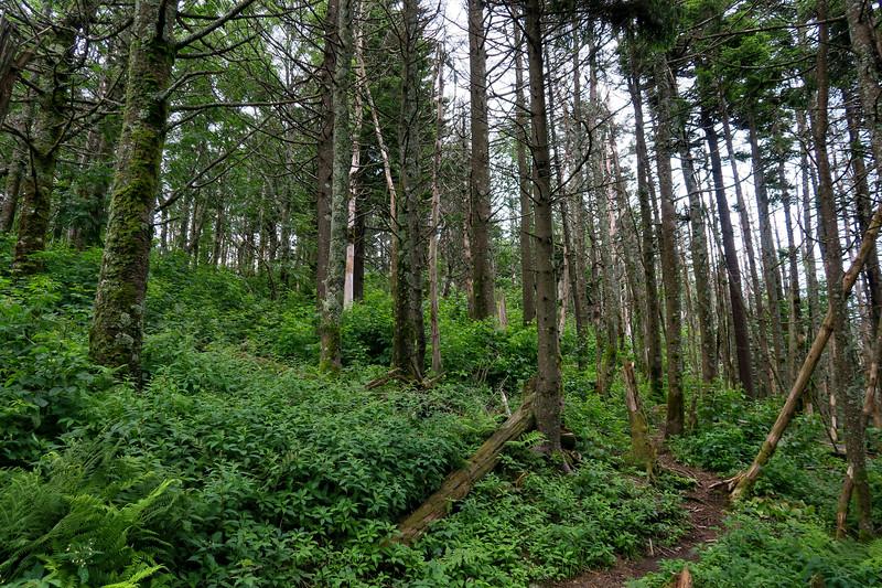 Mountains-to-Sea Trail - 6,200'
