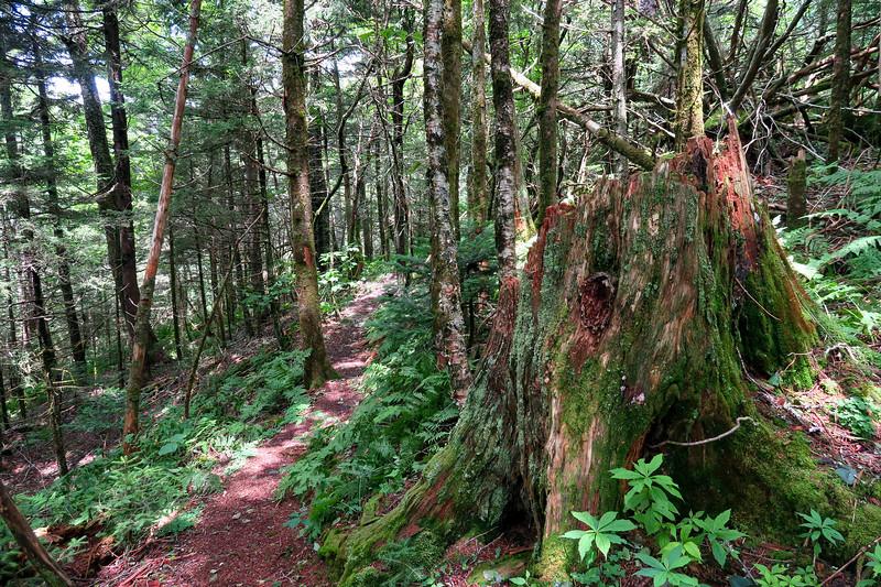 Mountains-to-Sea Trail - 5,600'