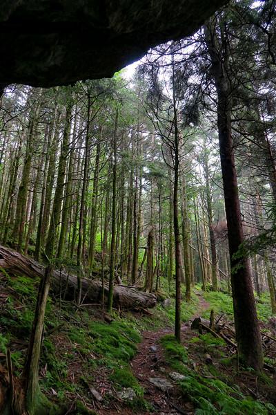 Mountains-to-Sea Trail - 6,050'