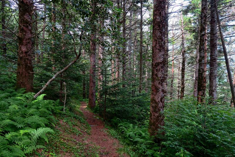 Mountains-to-Sea Trail - 5,580'