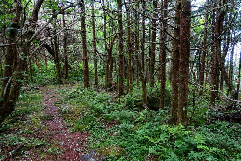 Mountains-to-Sea Trail - 5,850'