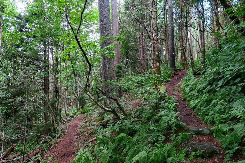 Mountains-to-Sea Trail - 5,520'
