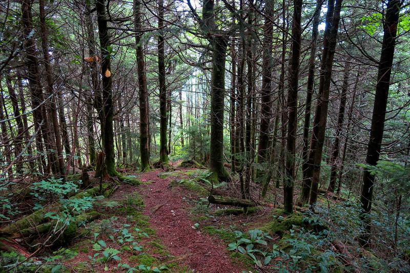 Mountains-to-Sea Trail - 6,300'