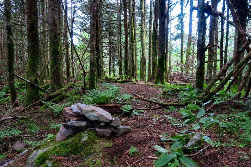 Mountains-to-Sea Trail @ Blackstock Knob - 6,320'