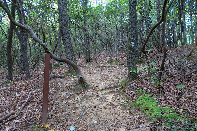Mountains-to-Sea/Shut-In Trail / Chestnut Cove Overlook Access Path Junction -- 3,020'