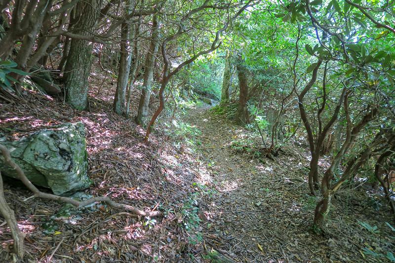 Mountains-to-Sea Trail -- 4,580'