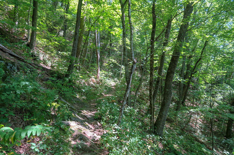 Mountains-to-Sea Trail -- 3,920'