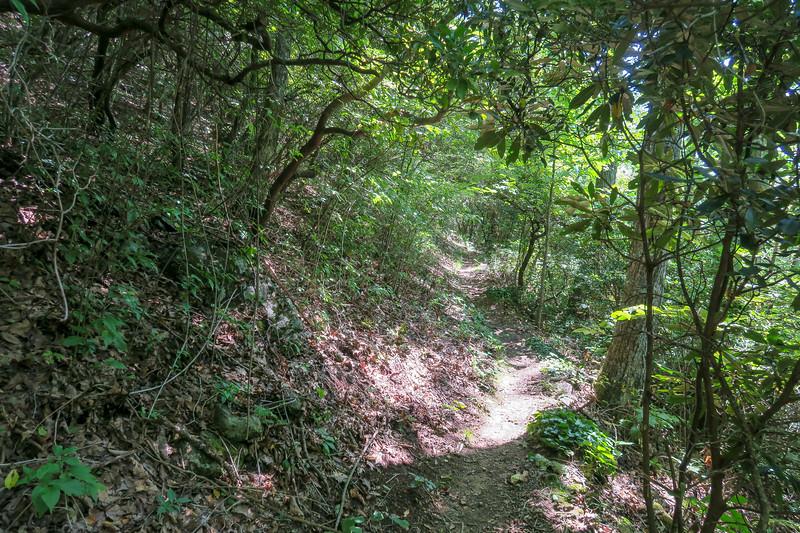 Mountains-to-Sea Trail -- 4,250'
