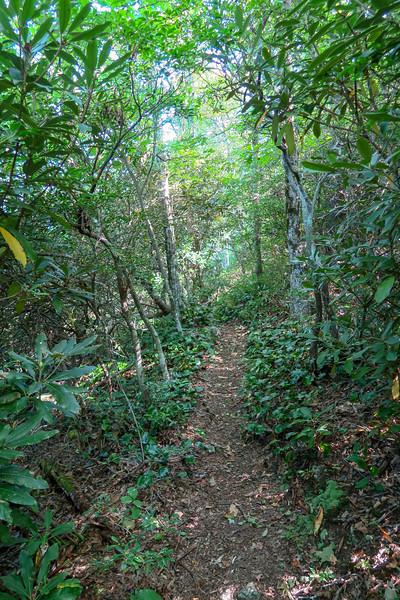 Mountains-to-Sea Trail -- 4,420'