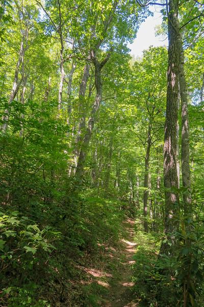Mountains-to-Sea Trail -- 3,950'